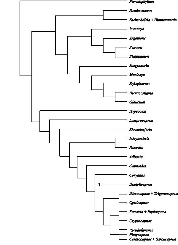 actaea racemosa 1 dh